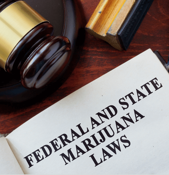 Which States Are Most Likely to Legalize Marijuana in the Future