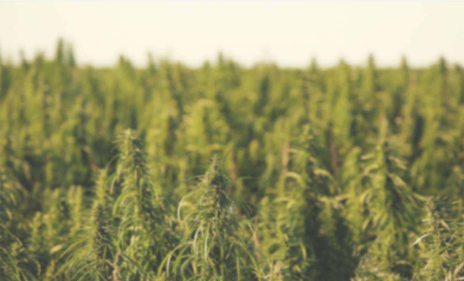 Medical Marijuana Inc. Announces Third Quarter 2014 Shareholders Report