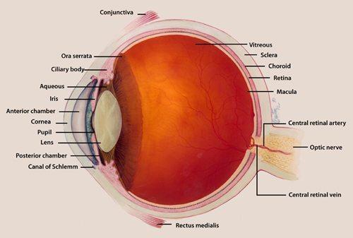 Retinal Damage - Medical Marijuana Research