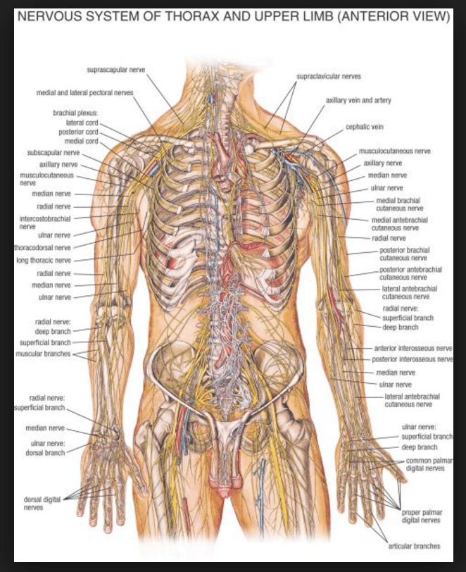 nervous system disorders The nervous system is a complex, sophisticated system that regulates and coordinates the body's basic functions and activities it is made up of two major divisions: the central nervous.