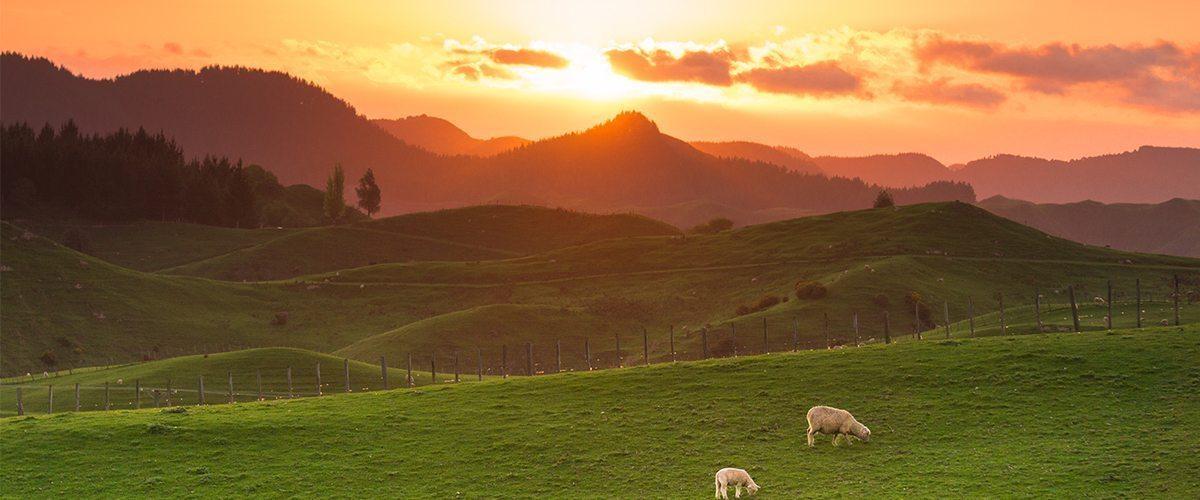 New Zealand Cannabis Laws