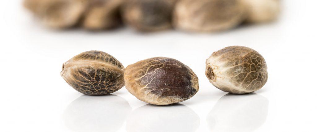 hemp seeds nutritional benefits
