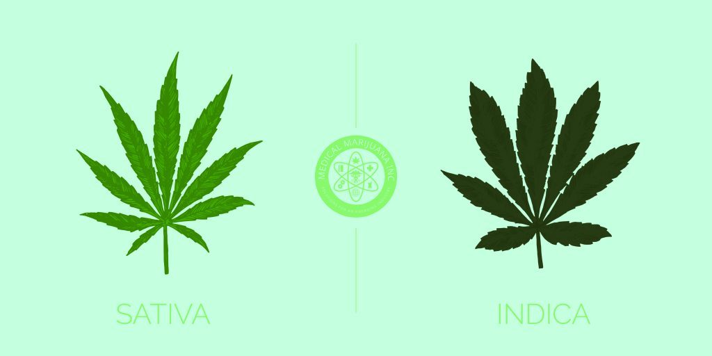 sativa vs indica chart