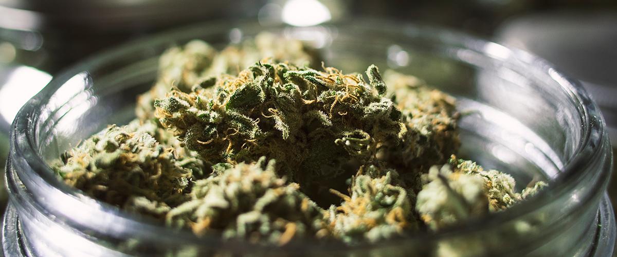 how to keep marijuana fresh