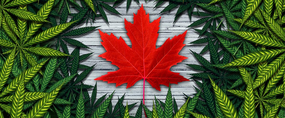 Canada marijuana laws
