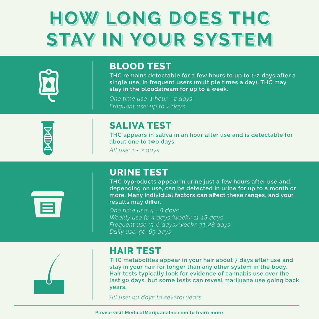 how long does thc stay in your system | medical marijuana, inc.  medical marijuana inc