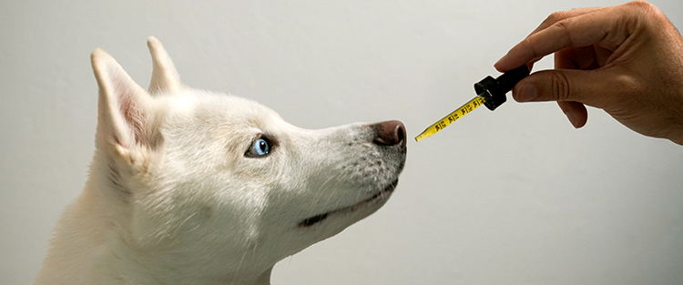 CBD for pets: wellness benefits for dogs and cats
